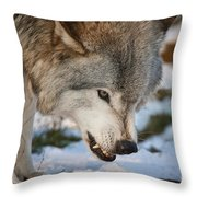 Timber Wolf Pictures 985 Throw Pillow