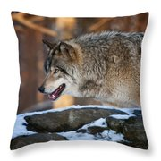 Timber Wolf Pictures 991 Throw Pillow