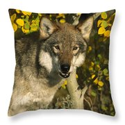 Timber Wolf Teton Valley Idaho Throw Pillow