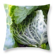 Tinted Tracery  Throw Pillow