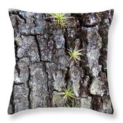 Tiny Baby Air Plants Throw Pillow