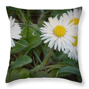 Tiny Daisies Throw Pillow