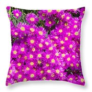 Tiny Dancer - Colorful Midday Flowers Lampranthus Amoenus Flower In Bloom In Spring. Throw Pillow