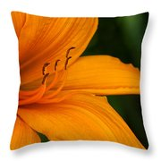 Tiny Dolphins In A Sea Of Lily Throw Pillow