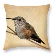Tiny Hummingbird Resting Throw Pillow