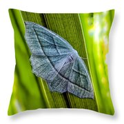 Tiny Moth On A Blade Of Grass Throw Pillow by Bob Orsillo