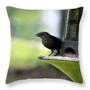 Tiny Seed For A Tiny Bird Throw Pillow