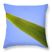 Tip Of An Iris Leaf Isolated On Blue Throw Pillow