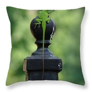 Tip To Tail Reverse Throw Pillow