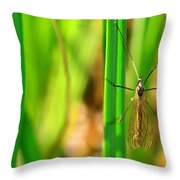 Tipula Throw Pillow by Tommytechno Sweden