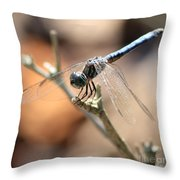 Tired Dragonfly Square Throw Pillow