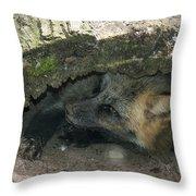 Tired Fox Throw Pillow