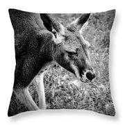 Tired Old Kangaroo Throw Pillow