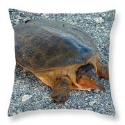 Tired Turtle Throw Pillow
