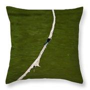 Tisa Dragonfly Throw Pillow