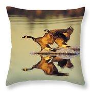 Tk0157, Thomas Kitchin Canada Geese Throw Pillow