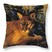 Tk0397, Thomas Kitchin Florida Panther Throw Pillow