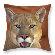 Tk0460, Thomas Kitchin Cougarmountain Throw Pillow