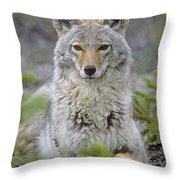 Tk0607, Thomas Kitchin Coyote In Spring Throw Pillow