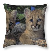 Tk0615, Thomas Kitchin Cougarmountain Throw Pillow