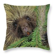 T.kitchin 14107c, Porcupine In Spruce Throw Pillow