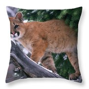 T.kitchin 15274d, Cougar Kitten Throw Pillow