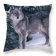 T.kitchin, 19821c Gray Wolf, Winter Throw Pillow