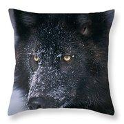 T.kitchin Tk1731e, Gray Wolf, Timber Throw Pillow