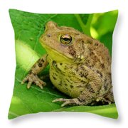 Toad Sitting Throw Pillow