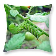 Tobacco Hornworm - Manduca Sexta - Six Spotted Hawkmoth Throw Pillow