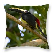 Toco Toucan Amazon Jungle Brazil Throw Pillow