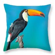 Toco Toucan Perched Throw Pillow