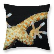 Tokay Gecko Feet Throw Pillow