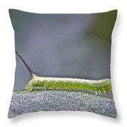 Tomato Hornworm - Manduca Quinquemaculata - Five Spotted Hawkmoth Throw Pillow