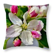 Tomorrow's Apple Throw Pillow