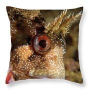 Tompot Blenny Portrait Throw Pillow