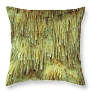 Toothed Fungi Macro Throw Pillow