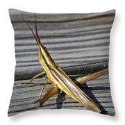 Toothpick Grasshopper Throw Pillow