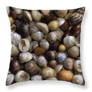 Topshells Whelk And Periwinkle Shells Throw Pillow