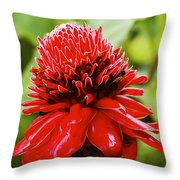 Torch Ginger Single  Throw Pillow