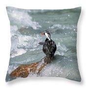 Male Torrent Duck Throw Pillow