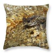 Torrent Treefrog Aka Waterfall Frog Throw Pillow