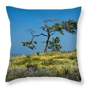 Torrey Pine On The Cliffs At Torrey Pines State Natural Reserve Throw Pillow