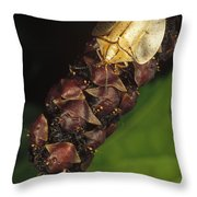 Tortoise Beetle Mother Shields Throw Pillow