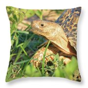 Tortoise Greens Throw Pillow