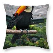 Toucan Throw Pillow