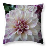 Touch Of Pink Dahlia Throw Pillow