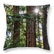 Towering Redwoods Throw Pillow