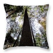 Towering Timber Throw Pillow