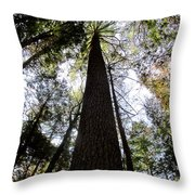 Towering Timber Throw Pillow